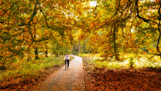 Cycler at the Veluwe during autumn